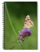 Painted Lady Butterfly In Shadows Spiral Notebook