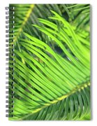 Palms In Light And Shadow Spiral Notebook