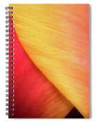 Pastel Curve  Spiral Notebook
