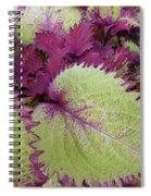 Patterns In Nature Spiral Notebook
