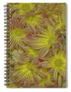 Pelee Mums Plus Spiral Notebook