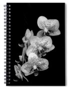 Phalaenopsis Orchids Black And White Spiral Notebook