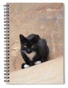 Pharaoh Cat Spiral Notebook