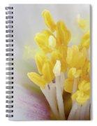 Philadelphus Flower Extreme Close Up With Pollen Spiral Notebook