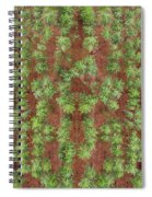 Pine Rows Aerial Spiral Notebook
