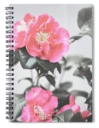 Pink Camellia. Shabby Chic Collection Spiral Notebook