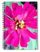 Pink Zinnia With Spider Spiral Notebook