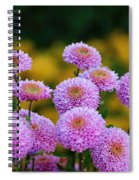 Pompom Dahlia In A Group Spiral Notebook
