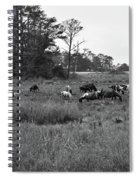 Pony Herd Bnw Spiral Notebook