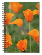 Poppies In The Breeze Spiral Notebook