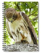 Predator With Prey Spiral Notebook
