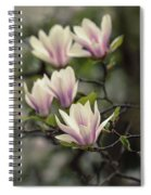 Pretty White And Pink Magnolia Spiral Notebook