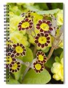 Primula Gold Lace Spiral Notebook