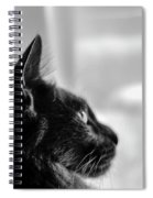 Profile Of A Long Haired Cat In Window Spiral Notebook