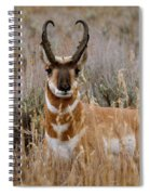 Pronghorn In The Sage Spiral Notebook