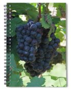 Purple Grape Bunches 13 Spiral Notebook