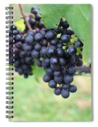 Purple Grape Bunches 20 Spiral Notebook
