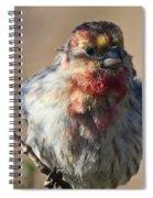 Rare Multicolored Male House Finch Spiral Notebook