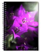 Rays Of Bougainvillea Spiral Notebook