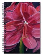 Red Amaryllis  Spiral Notebook