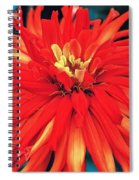 Red Bliss Spiral Notebook