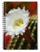Red Bougainvillea Background For White Argentine Giant Flower Spiral Notebook