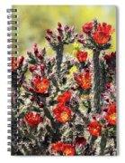 Red Hot Cholla  Spiral Notebook