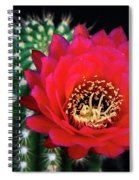 Red Hot Torch Cactus  Spiral Notebook