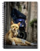 Red Cat With Green Eyes Spiral Notebook