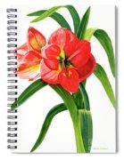 Red-orange Amaryllis Spiral Notebook