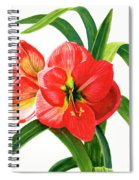 Red Orange Amaryllis Square Design Spiral Notebook