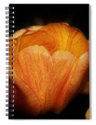 Red Orange Yellow Tulip Spiral Notebook