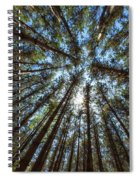 Red Pines 1 Spiral Notebook