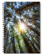 Red Pines 2 Spiral Notebook