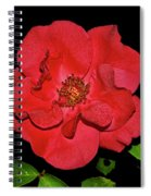 Red Rose With Dewdrops 038 Spiral Notebook