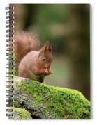 Red Squirrel Sciurus Vulgaris Eating A Seed On A Stone Wall Spiral Notebook