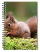 Red Squirrel Sciurus Vulgaris Spiral Notebook