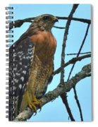 Red Shouldered Hawk Panorama Spiral Notebook