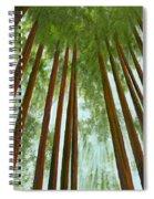 Redwood Forest Spiral Notebook