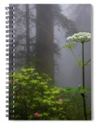 Redwoods By Crescent City 1 Spiral Notebook