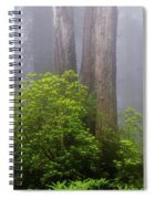Redwoods By Crescent City 7 Spiral Notebook