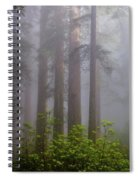 Redwoods By Crescent City 8 Spiral Notebook