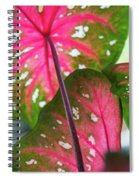 Reflections On The Calming Of Pink Spiral Notebook