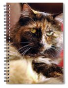 Regal Feline Spiral Notebook