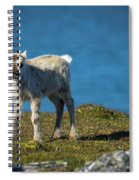 Reindeer Grazing In Spitzbergen Spiral Notebook