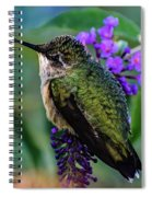 Rescued Ruby-throated Hummingbird Spiral Notebook