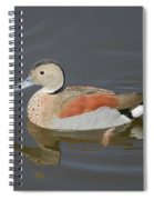 Ringed Teal Spiral Notebook