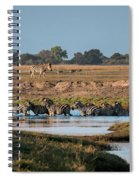 River-crossing Zebras Spiral Notebook