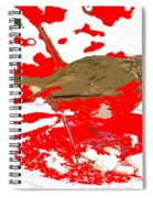 Robin And Snow Spiral Notebook
