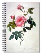 Rosa Inermis Spiral Notebook